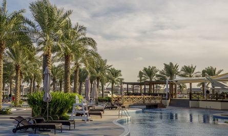 Bahrain Palm Tree Pool Arab Sea